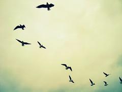 Libertad... (lunitt@) Tags: paris libertad palomas 2009 jardines diciembre palacio luxemburgo vivir