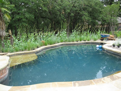 Native Pool Design /// Giant Coneflower & Little Blue Stem