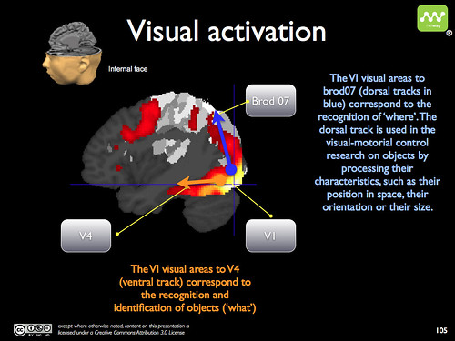 Facebook brain activation - visual attention