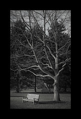 By the Bench (Darkr) Tags: trees england white black london kew gardens by bench photography britain royal bark botanic contrat