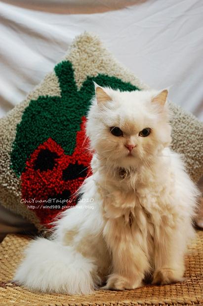 0123-Cat。叮叮亂毛01.jpg