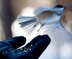 BirdWalk-12