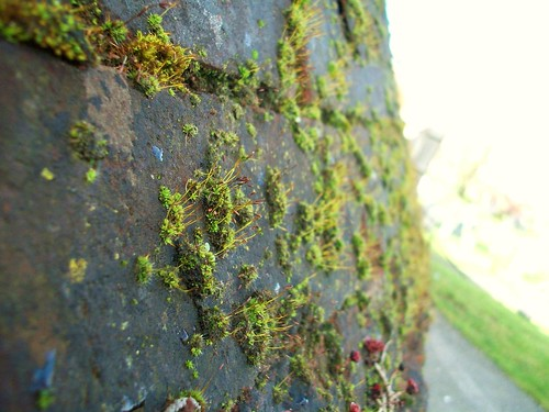 tiny moss growths