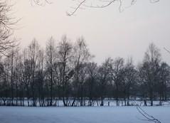 Im Wildenloh - Blick auf eine Baumgruppe (feuermelder2009) Tags: winter oldenburg wildenloh