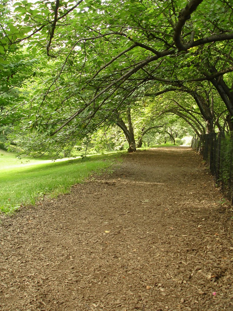 Central Park 002i