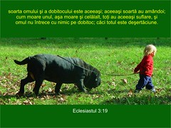 Eclesiastul 03-19 (Palosi Marton) Tags: kids childrens copii crestine versete biblice