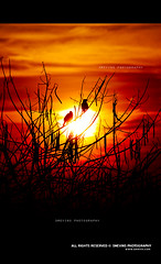 sunrise @ lalbagh, bangalore (Smevin Paul - Thrisookaran !! www.smevin.com) Tags: morning trees sky sun india birds silhouette sunrise paul photography early photographer photos branches indian bangalore images rise karnataka lalbagh malayali reddish bengaluru smevin smevinpaul d40x smevins thrissokaran wwwsmevincom smevinp
