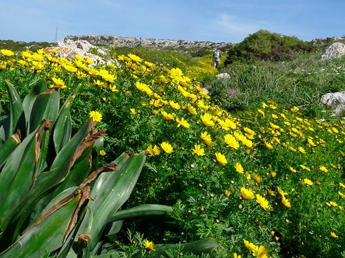 Cyprus - Cape Greco