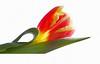 FLOWERS LANGUAGE OF UNIVERSE (Weirena) Tags: flowers light white macro nature spring nikon spirit ps dreams emotions masterphotos abigfave platinumphoto theunforgettablepictures betterthangood natureselegantshots weirena magicunicornverybest magicunicornmasterpiece