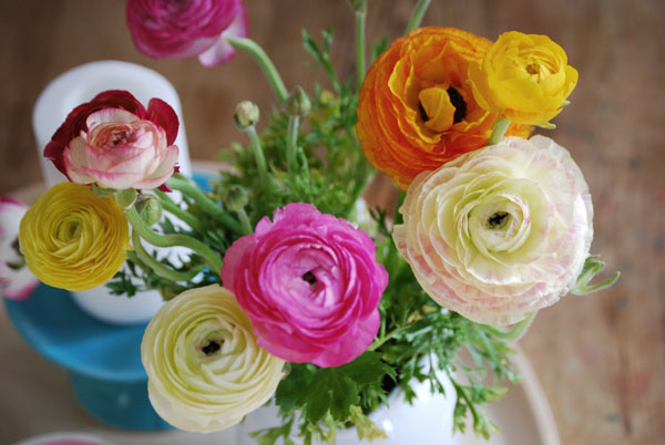 i am so not above getting on the ranunculus band wagon.