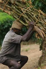 IMG_2440 (y.awanohara) Tags: india green tea kerala plantation teaplantation southindia munnar