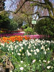 IMG_9377 (SC in Seattle) Tags: flower spring valley tulip skagit 2010 ijen szuchichen skagig hsienyi
