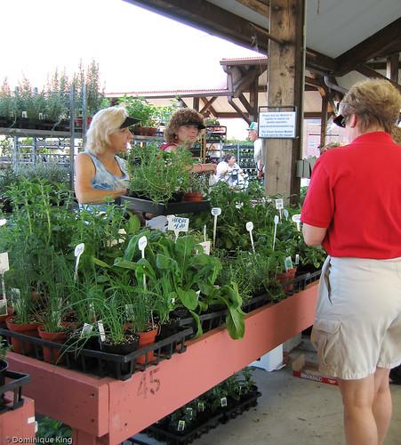 Toledo Farmers Market-2