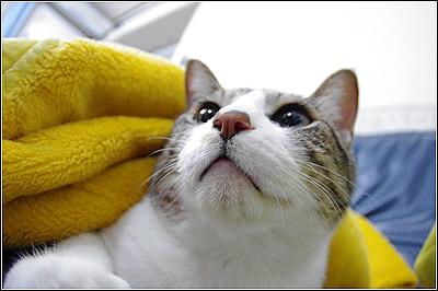 今日の猫(2011-05-23)