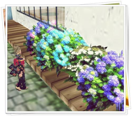 *hydrangea flower2011*