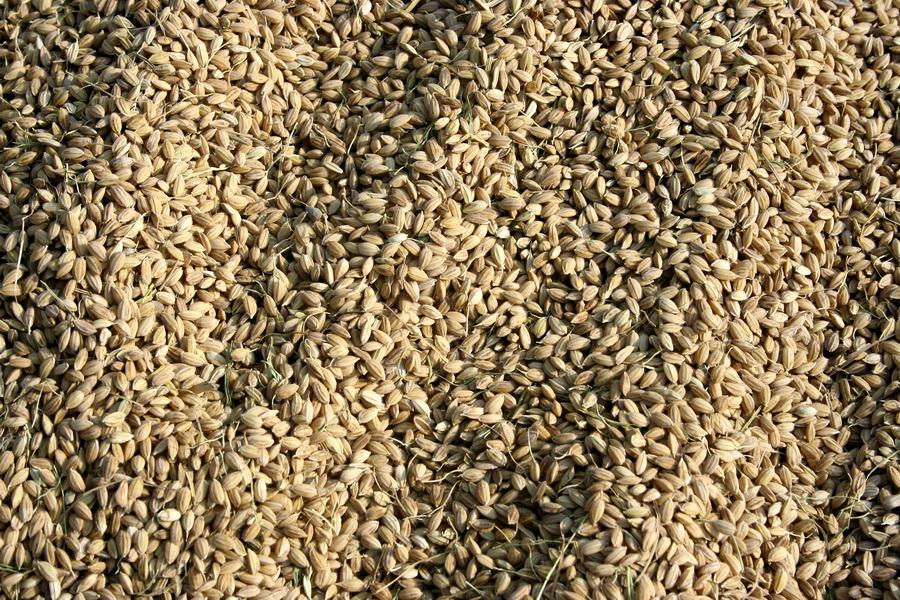 Rice(2)