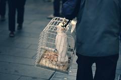 Urban Parrot (Dbl90) Tags: street city urban white milan bird canon torino eos 50mm milano parrot cage via 2009 metropolitan dario 450d zampiron sottoilcielodimilano