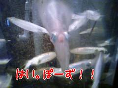 at 野毛!カメラ目線の烏賊です。