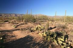 IMG_9670 (simon_travelboy) Tags: arizona tucson saguaronationalpark