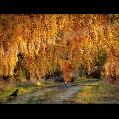 The Golden Path II (h.koppdelaney) Tags: life autumn art digital photoshop gold golden gate energy paradise peace symbol path buddha peaceful monk buddhism philosophy age mind crow awareness spiritual metaphor dharma symbolism psychology archetype vipassana