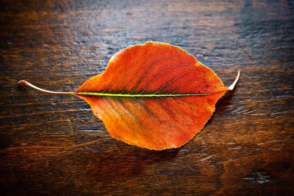 Orange you glad I picked up this leaf?