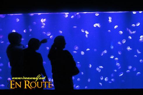 Manila Ocean Park Jellies