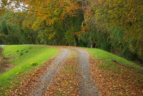 秋の小道 / footpath