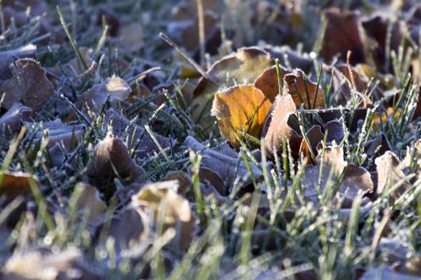 121909_frost4
