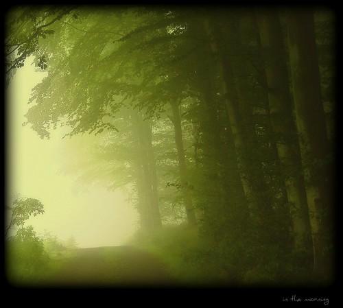 Weg zum Steinbruch - in the morning