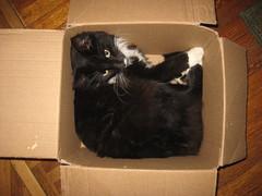 Zak-in-a-box