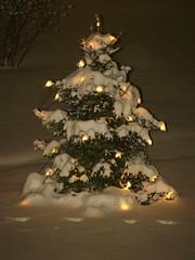 Weihnachtsbaum im Schnee (olwes) Tags: schnee snow bielefeld