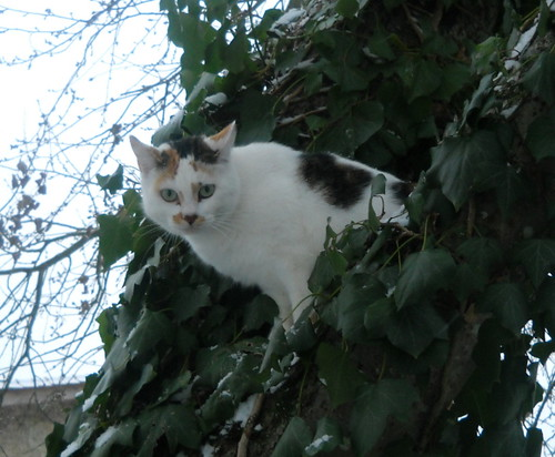 Je ne sais pas comment j'ai reussi a avoir cinq chats..... 4258398987_34d57e8703