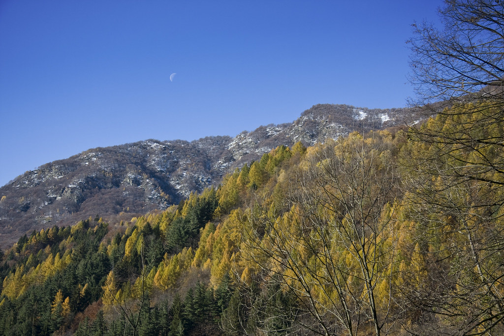 The Moon over the Larches #1