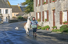 village-square (imagesofnormandy) Tags: snow playing chickens dogs animals cottage llama freerange fresheggs gite holidayrental couplesonly llamawalks llamatreking