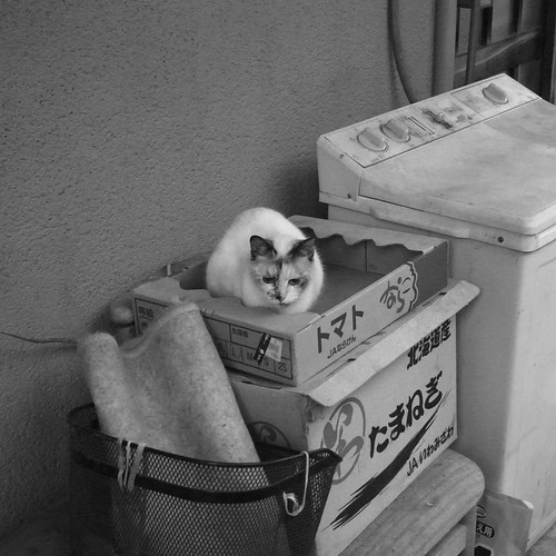 Today's Cat@2010-01-11