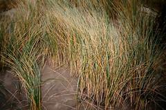 (~attm~) Tags: sf sanfrancisco film grass sand fuji superia dunes lofi 200 oceanbeach 135 vivitar autofocus trashcam fujisuperia200 marram autoflash shitcam ps80 vivitarps80 ~attm~