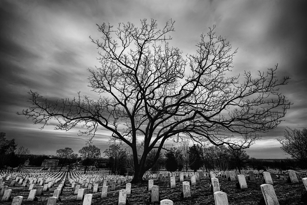 The Raised Bones of Arlington National Cemetery