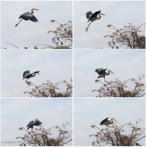 nesting...