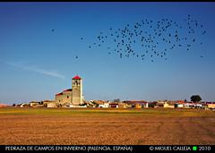 PEDRAZA DE CAMPOS EN INVIERNO (Miguel Calleja) Tags: winter espaa invierno palencia castillaylen tierradecampos pedrazadecampos