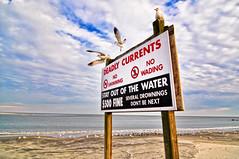 Day 160 - No Swimming at The Battery Marshall (joel8x) Tags: wallpaper seagulls beach sc birds sign nikon 365 sullivansisland d90 project365 batterymarshall tokinaaf1116mmf28