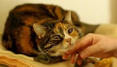 extrem-Genuss! (Stephi 2006) Tags: cat friend hand siesta nele altglas pentaxk10d velvetpaws smcpa50mmf17 catmoments
