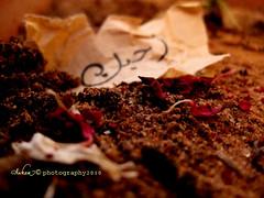 (eman fahad) Tags: love