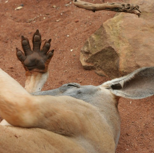 Skippy the bush kangaroo by Heaven`s Gate (John)