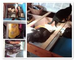 Under My Bed (Just Katety) Tags: cats cat bed fdsflickrtoys kitty kitties peanut mister carebears strawberryshortcake mybedroom underthebed mrjones packrat coincollection cornerofmyroom scrapbookstuff carebearsuitcase clutteredcornerofmyroom