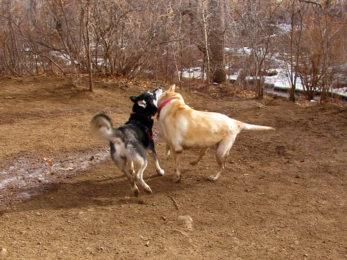 Sadie plays with friend