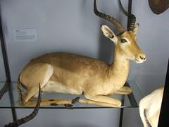 DSCF3581 (Phil D-UK) Tags: animals tring naturalhistorymuseum rothschild
