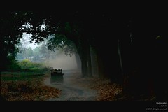 Journey (Ajith ()) Tags: life road park morning trees light shadow sky mist tree green nature leaves rain silhouette fog way landscape hope nationalpark mood shadows jeep earth space wildlife tiger reserve atmosphere jim negativespace negative national rainy journey mm dust nikkor gypsy 70200 f28 vr fallenleaves corbett travelogue 70200mm nikkon 70200f28 forst maruti corbettnationalpark marutigypsy nikkor70200f28 jimcorbettnationalpark 70200vrf28 nikond40x d40x