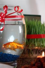 Goldfish (Saeed.Kaviani) Tags: fish candle goldfish eid haftsin norooz nowrooz persiannewyear sabzeh senjed