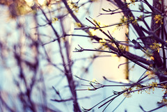 (ingephotography) Tags: light 50mm golden branch bokeh branches hour