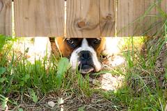Pita Under the Fence